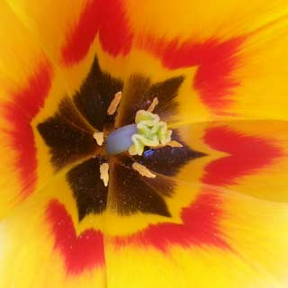 geel rood bloem