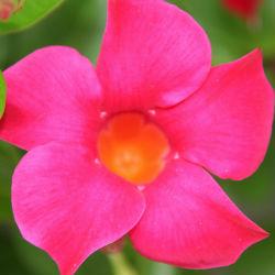 oranjeroze bloem coaching